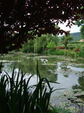 睡蓮の庭3