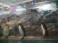 ペンギン館3